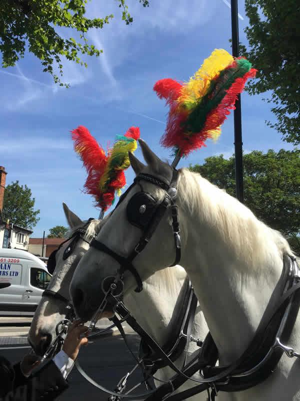 Practical Help -O'Dwyer Funeral Director Horses